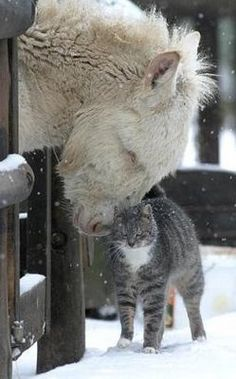 "* * PONY: "" How ya be, grey tabby? "" CAT: "" Cold, whadya think? I seen a couple frozen mice this mornin', but de hell wif dat. Kin I comes in by you and snuggle in yet furry winter coat? "" PONY: "" By all means."""
