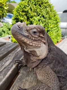 Who could ask for more than a nice salad lunch and meeting the locals at the The Plough Inn in Ifield, Crawley. Attention all Divas: If your phone doesn' Reptile Party, Tortoises, The Locals, Reptiles, Divas, Beast, Parties, Animals, Fiestas