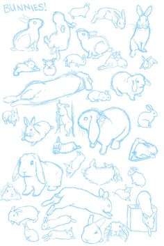 @randomlyawake's beautiful studies of bunnies : )