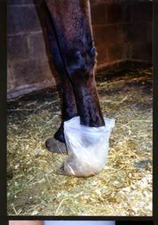 DiY Plastic Bag Soaks for Healthy Hooves