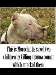 Animals are amazingly brave