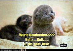 Wurld domination???