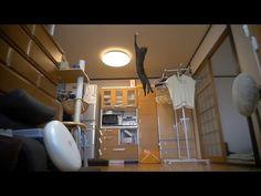 続 けしからん猫の垂直跳びには敵わない。NOTHING CAN RIVAL THE JUMPING CAT 2