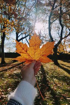 Nature Landscape, Landscape Photos, Fall Pictures, Fall Photos, November Pictures, Beauty Fotos, Instagram Photography, Autumn Instagram, Nature Instagram