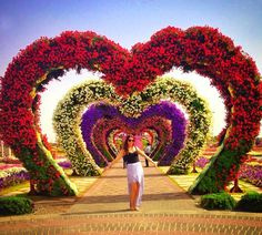 The Hearts Passage is highly popular among the visitors of the Dubai Miracle Garden. Whether it is the women or couples of honeymooners, they all love to have their photographs with the heart passage. It is one of the most iconic flroal theme of the Dubai Miracle Garden. Growing Flowers, Large Flowers, Real Flowers, Geranium Plant, Geranium Flower, Heart Structure, Million Flowers, Three Color Combinations, Miracle Garden