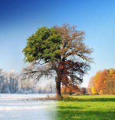 4 seasons - 1 tree