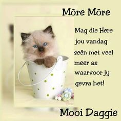 Good Morning Wishes, Good Morning Quotes, Goeie More, Afrikaans Quotes, Special Quotes, Teddy Bear, Words, Inspirational, Mornings
