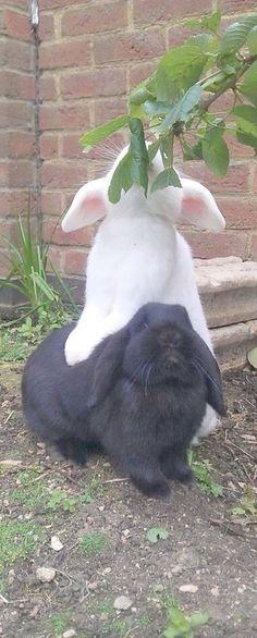 cooperation Bunny