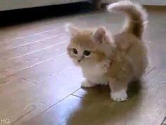 Cea mai pufoasa pisica din totdeauna