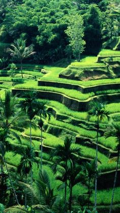 Terraced rice fields, Bali, Indonesia http://www.vacationrentalpeople.com/vacation-rentals.aspx/World/Asia/Indonesia/Bali