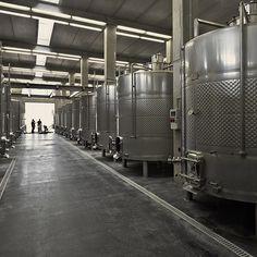IXSIR Winery by Raed Abillama Architects