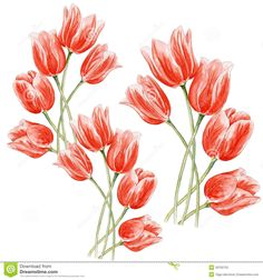 Watercolor Tulips On An Isolated Background. - Download From Over 36 Million High Quality Stock Photos, Images, Vectors. Sign up for FREE today. Image: 39700720