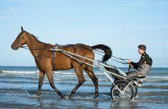 Sulky sensasation - Matin bleu, au bord de l'eau, Plage de Deauville, Normandie - FR