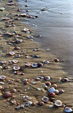 Seashells at the beach of Ashdod, Israel. Seashells at the beach of Ashdod, Israel. Terra Santa, I Love The Beach, Am Meer, Ocean Beach, Beach Fun, Sanibel Beach, Shell Beach, Beach Walk, Summer Beach