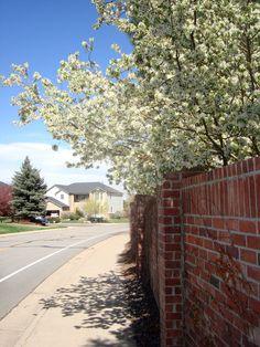 Lone Tree Colorado Spring Flowers Care Springs Denver