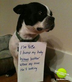 Dog Shame | I'm YuBe. I hump my baby human brother when my mom...