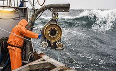 Hauling a crab pot in Alaska's crab fisheries