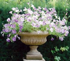 The Medium Victorian Tazza is the smaller of two in the same effortlessly classical style offered by Lucas Stone, both can be planted with a superb variety of colour or displayed as a lovely stand alone architectural piece.