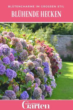 Die 90 Besten Bilder Von Kleiner Garten Gardens Little Gardens