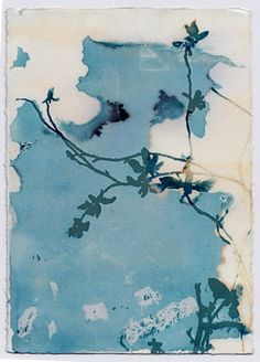 Wandering Floral by Krista McCurdy - Cyanotype print with images from nature, made with my Wet Cyanotype process, which produces Cyanotype Process, Sun Prints, Alternative Photography, Photo Processing, Botanical Art, Watercolor Paper, Painting & Drawing, Printmaking, Monochrome