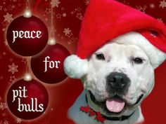 Peace for Pit Bulls #cute #animals #pitbulls #christmas