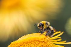 Nocturne, National Geographic, Bee Pictures, Bee Images, Insect Hotel, Fotografia Macro, Royal Jelly, Bee Sting, Save The Bees