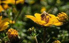 Bee by Norbert Kamiński