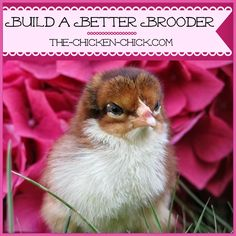 How To Build A Better Brooder For Raising Baby Chicks