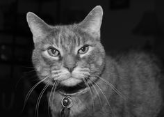 If you need to take my picture I guess I will oblige. Photos, Pictures, Cats, Animals, Gatos, Animales, Animaux, Kitty, Cat