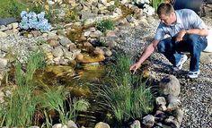 klares Teichwasser