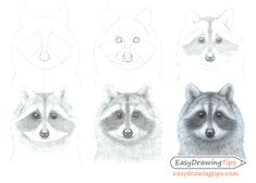 How to Draw a Raccoon Face Step by Step - EasyDrawingTips Pencil Drawings For Beginners, Pencil Drawings Of Girls, Pencil Drawings Of Animals, Simple Line Drawings, Easy Drawings, Draw Animals, Drawing Tutorials, Face Line Drawing, Drawing Sheet