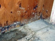 has a 6 step Mold Remediation Process and the expertise to guara. Mold In Basement, Damp Basement, Basement Stair, Basement Ideas, What Causes Mold, Mold Exposure, Get Rid Of Mold, Remove Mold, Restoration Services