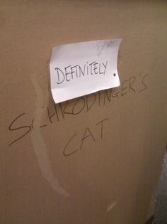 As seen in EB Games in Oakridge in Vancouver. We didn't find out what was in the box, but it was a 5x5x5 foot cube on a pallet, so I have to assume that the cat was a tiger or something.