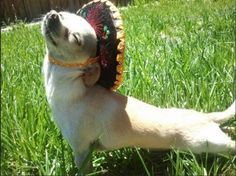 time for some yoga… in my sombrero.