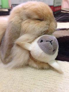 Night Night Every Bun Have A Bunderful Weekend!!!! #SleepingBunny #Bunny #BunnyBox