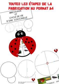 Bricolage coccinelle - cycle de vie GS