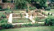 Todo para que puedas desarrollar tu propio huerto: Frutas y hortalizas: 10 ideas para combinarlas