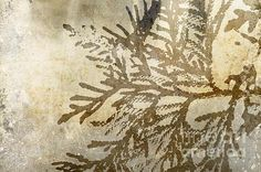 """Juniper Branch Impression, art print by Suzanne Powers, $29.00, Juniper """"leaf"""" against a textured background, looks fossil like.  A contemporary look in sepia and grey."""