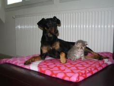 Volko et Gribouille