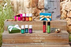 Young Living Holiday Gifts - Exclusive Farm Oils Mini Oil Collection - www.EssentialOils4Sale.com