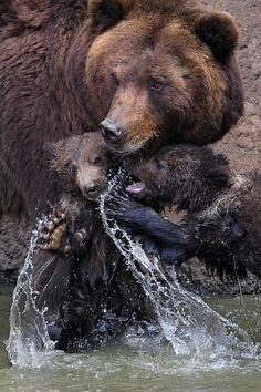 Cute Creatures, Beautiful Creatures, Animals Beautiful, Bear Art, Cute Animal Pictures, Nature Animals, Brown Bear, Cute Baby Animals, Nature Pictures