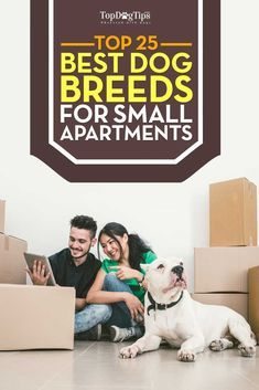 Live in a tiny place and want to adopt a dog? Here are the best dog breeds for small apartments that are ideal if you don't have plenty of indoor space. Small Puppy Breeds, Best Family Dog Breeds, Cute Puppy Breeds, Small Puppies, Best Dog Breeds, Family Dogs, Puppies Puppies, Teacup Puppies, Small Dogs