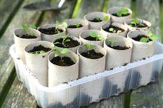 Ideia de como plantar em rolinhos de papelão e criar sua própria orta caseira | Como fazer em casa Artesanato
