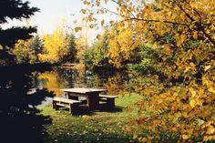 The Benefits of Trees-Morton Arboretum