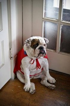 Why can't I go out and 'ruff' up the bad guys?