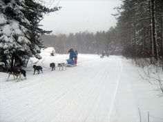 We SHARE portions of the C105D and Top D with dog sledders.  Please be respectful.  The onus is on us to avoid them.