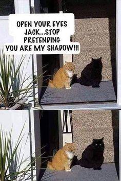 Stop pretending to be my shadow cat - cute animals - # . - Stop pretending to be my shadow cat – cute animals – # Listen - Funny Animal Jokes, Funny Animal Videos, Cute Funny Animals, Animal Humour, Funny Cute Cats, Funny Cats And Dogs, Funny Pets, Funny Minion, Funny Happy