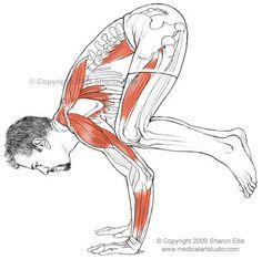 Benefits of Bakasana (crow pose) - Pose of the day