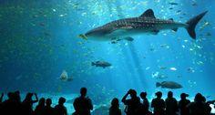 Explore S.E.A. Aquarium Singapore — One of the best places you must visit in Singapore
