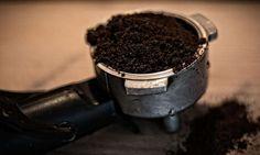 Marc de café anti fourmis